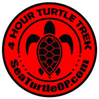 Turtle Trek - July 13, 2019